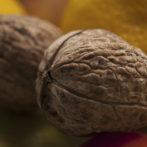 Gli omega-3 prevengono l'invecchiamento cerebrale