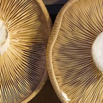 Anti Aging, Mushrooms and Vitamin D
