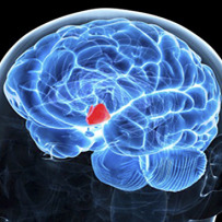 Hypothalamus, Inflammation and Aging