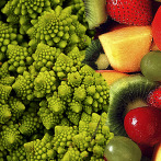 The type of nutrition determines the size of our brain