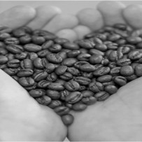 Coffee reduces risk of colorectal cancer