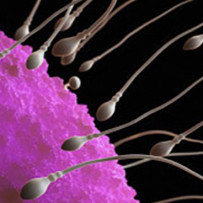 Sperm and eggs derived from skin cells of infertile men and women