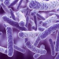 L'asse microbiota-ossa