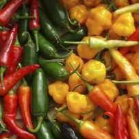 Peppers and Chili Peppers Anti-Aging