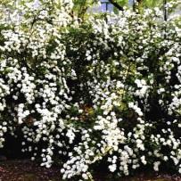Spring and Ayurvedic medicine