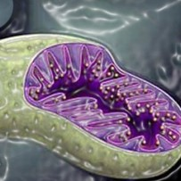 Mitochondria as a cause of inflammation following injury