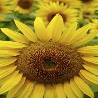 Carenza di  vitamina D diminuisce gli ormoni sessuali