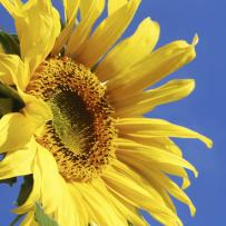 Bassi livelli di vitamina D e Sclerosi Multipla