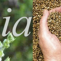 Anti-aging Chia Seeds