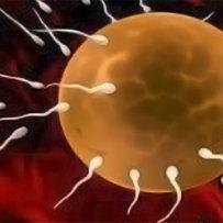 Omeopatia e fitoterapia per favorire la fertilità