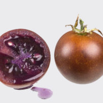 Una nuova linea di pomodoro chiamata bronzeo  è grado di migliorare le patologie infiammatorie dell'intestino.
