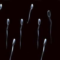 The spermidine and spermine contained in sperm and maternal milk may lead to a longer life