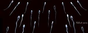 spermidina